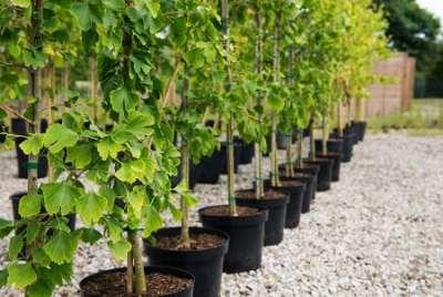 Популярные саженцы плодовых деревьев в 2021 году - что выбрать